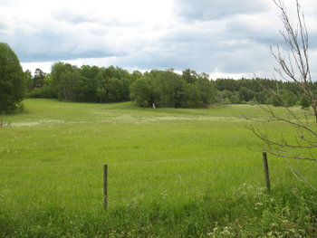 Meadow by Berig via wikimedia commons